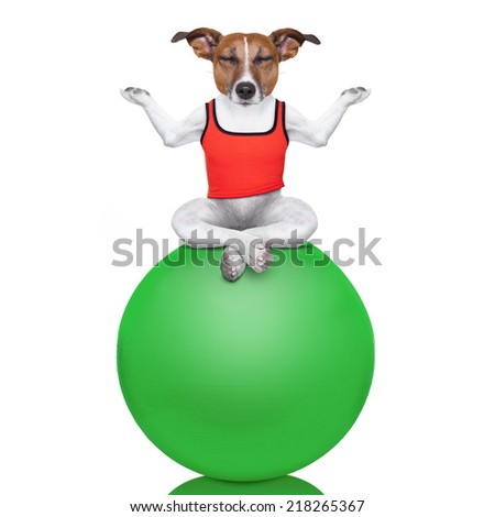yoga dog posing in a relaxing pose with both arms open and closed eyes balancing on a gym ball,  isolated on white background - stock photo