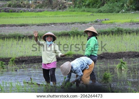 YOGYAKARTA,INDONESIA-APRIL 10, 2014:  Indonesian women greet passersby as they work in the flooded rice paddies outside Yogyakarta on April 10, 2014. - stock photo