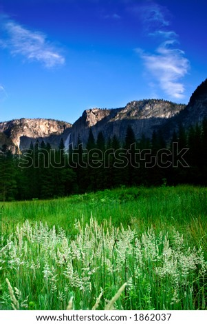 Yosemite National Park, shallow DoF with focus on foreground. - stock photo