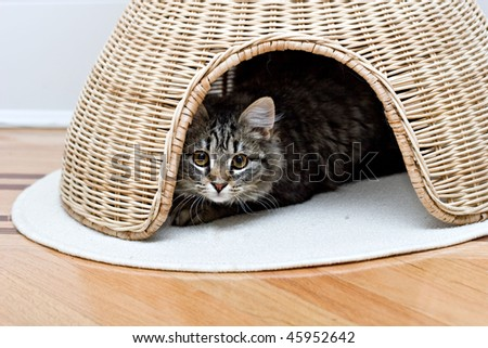 Young adorable cute cat is hiding in pet house playing - stock photo
