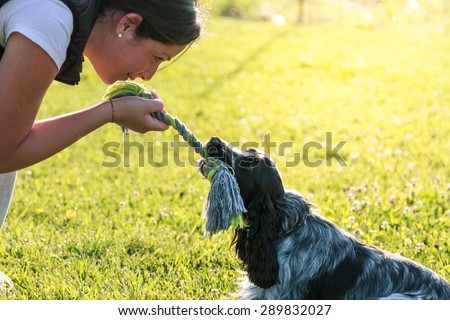 Young Adult female plays with her cute dog. English Cocker Spaniel puppy training - stock photo