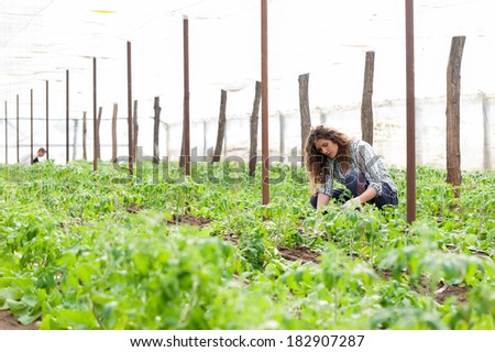 Young agriculture woman worker planting crop - stock photo