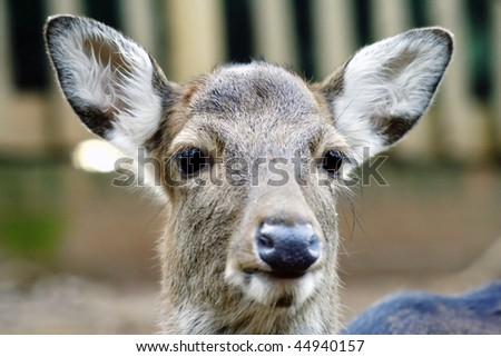 young and innocent deer - stock photo