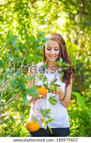 young beautiful woman picking oranges - stock photo