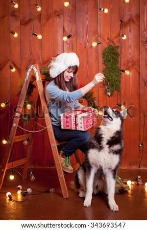 young beautiful woman wearing sweater and jeans near a Christmas tree with dogs.Husky - stock photo