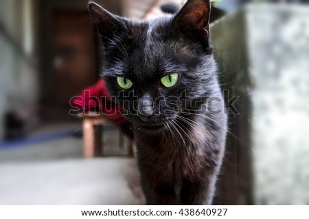 Young black cat with green expressive eyes in courtyard   - stock photo