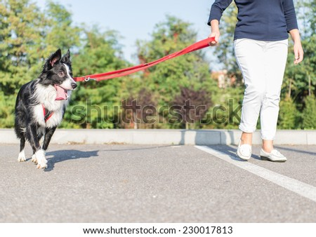 young border collie with owner walking together. concept about animals and pets - stock photo