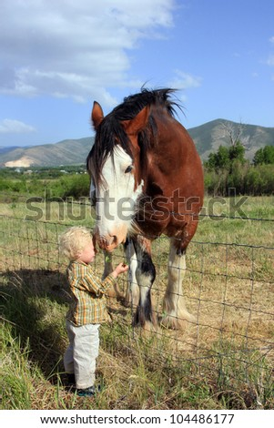 Young boy feeding a large horse. - stock photo