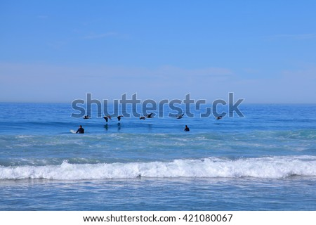Young boy surfers swimming on the boards in ocean with flying pelicans in San Diego, California. Enjoying a beautiful day with Pelicans flying over. - stock photo