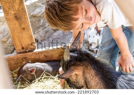 young boy taking care of domestic animals on a farm - stock photo