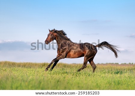 Young brown horse galloping, jumping on the field on a neutral background - stock photo