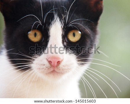 young cat, black and white,  19 close-up, front view - stock photo