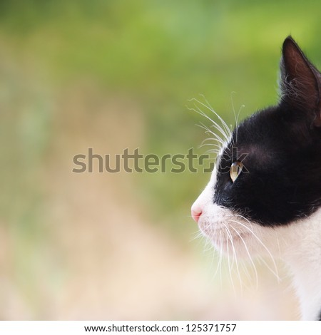 young cat, black and white, close-up, side view , square - stock photo