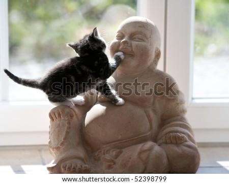 young cat climbs on Buddhafigur - stock photo