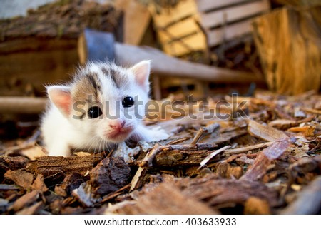 Young cat cub animal sneaking by axe in a brown barn  - stock photo