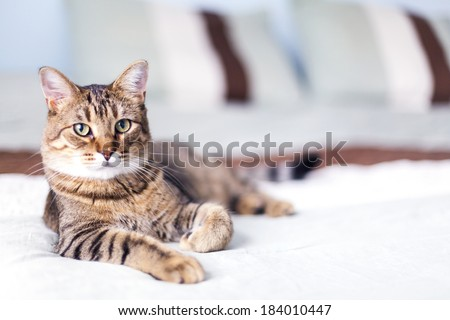 young cat in bedroom  - stock photo