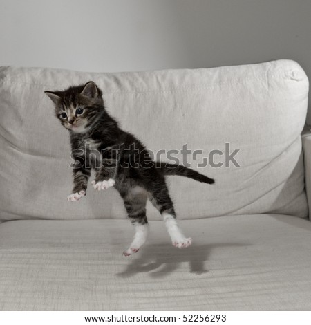 young cat in the branch - stock photo