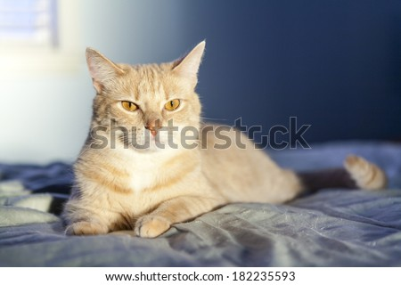 Young Cat in the morning - stock photo