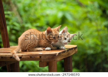 Young cat on the chair - stock photo