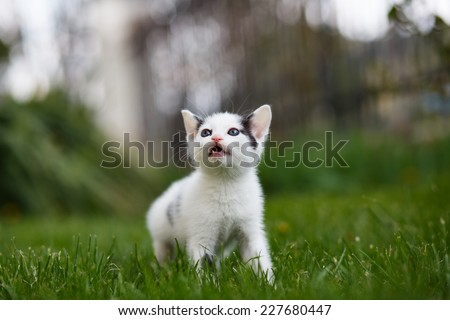 Young cat outdoors on a green lawn - stock photo