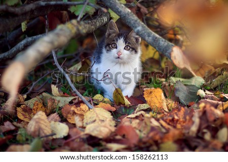 Young cat under the tree - stock photo