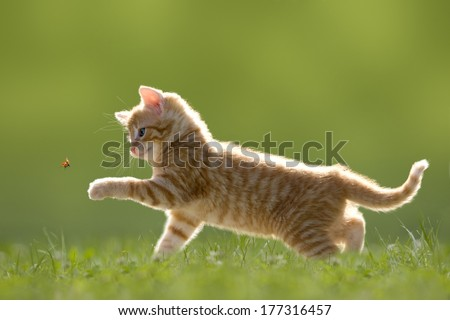Young cat with ladybird/ladybug on green meadow with back light - stock photo