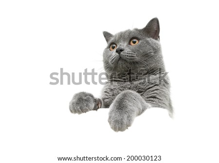 young cat with yellow eyes isolated on a white background. horizontal photo. - stock photo