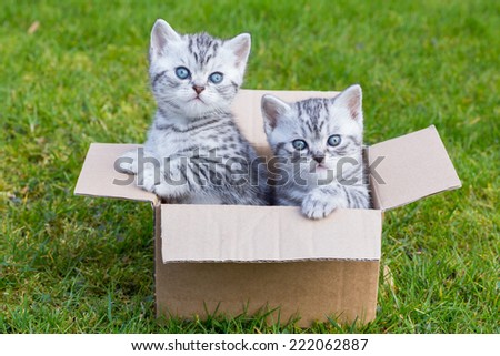 Young cats in cardboard box on green grass - stock photo