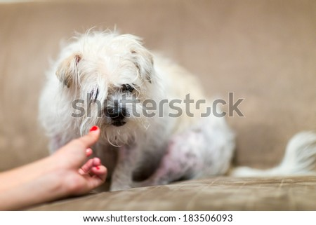 Young caucasian woman playing with her dog sitting on the couch - stock photo