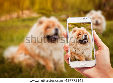 Young couple of dogs in the park. - stock photo