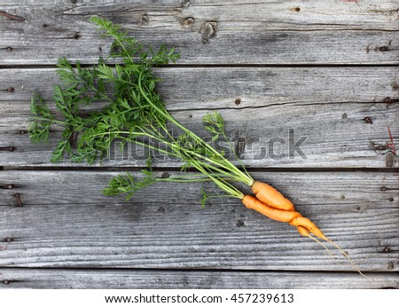 young couple orange carrots entwined together and lie on an old wooden surface top view / vegetable love during summer - stock photo