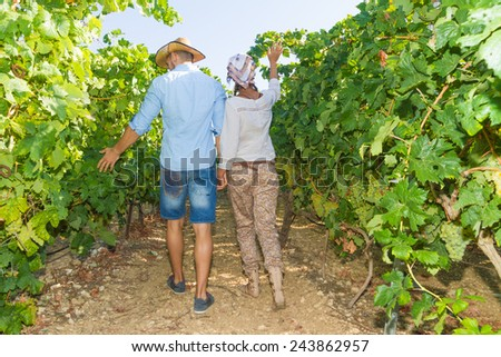 Young couple, vine growers, walking in the vineyard inspecting the fresh grape crop - stock photo