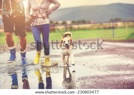 Young couple walk dog in rain. Details of wellies splashing in puddles. - stock photo