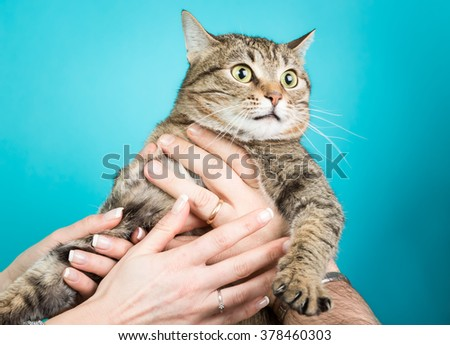 Young couple with a cat in hands isolated on blue - stock photo