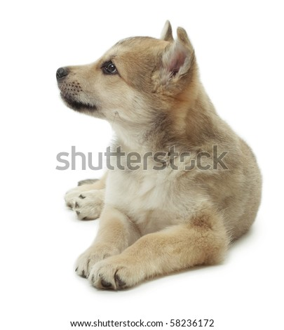Young cute lying dog - stock photo