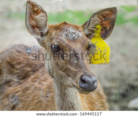 Young deer in farm - stock photo