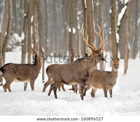 Young deer in winter forest - stock photo