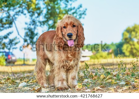 Young dog. - stock photo