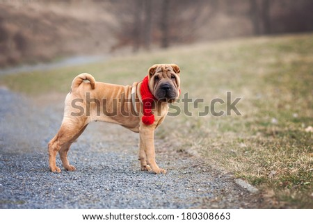 Young dog in the park - stock photo