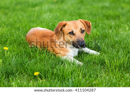 Young dog lying in the green grass for background use - stock photo