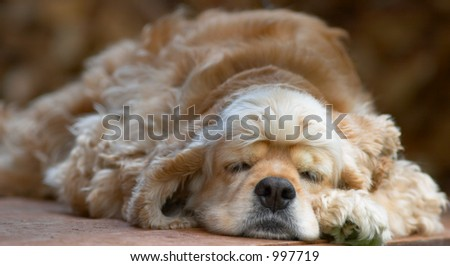 young dog sleeping 2 - stock photo