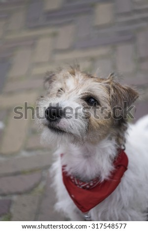 Young dog with red collar on a street - stock photo