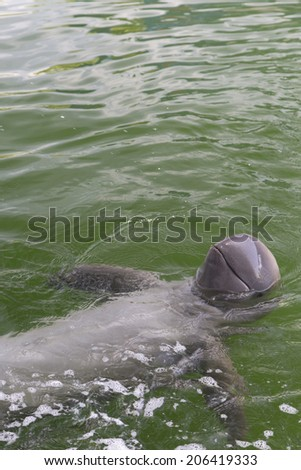 young dolphin enjoy swimming in a pool - stock photo