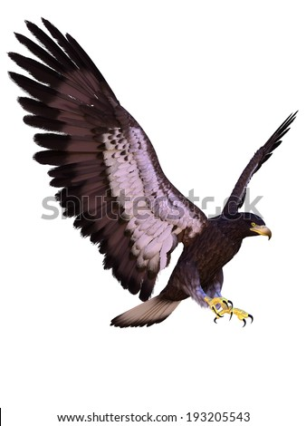 young eagle - stock photo