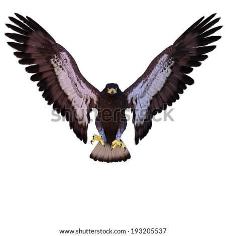 young eagle front view - stock photo
