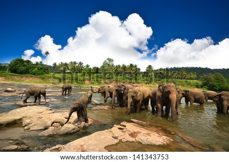 Young elephants playing in the water - stock photo