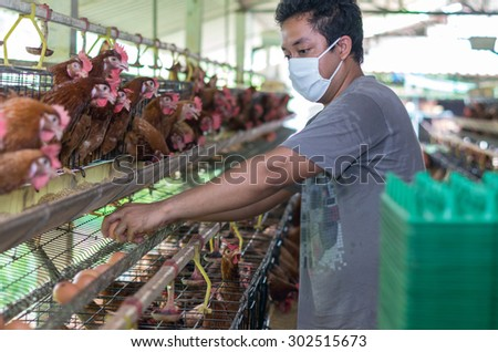 Young Farmer collecting the egg in egg chicken farm - stock photo