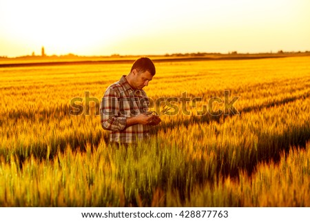 Young farmer in a field examining wheat crop at sunset. - stock photo