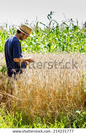 Young farmer standing in a wheat field looking at the crop - stock photo