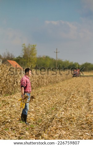 Young farmer walking on field and holding corn cobs during harvest - stock photo